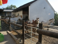 Pferde klein