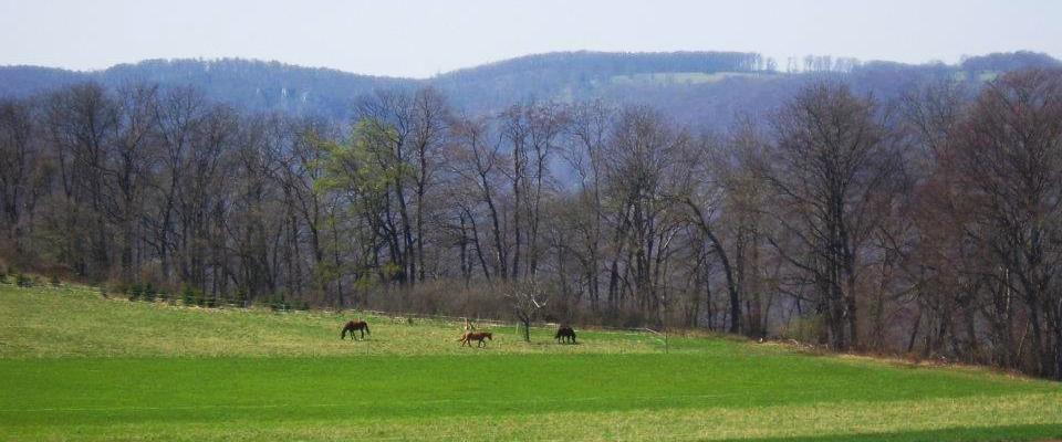 Wanderreitstation Roßgarten Holzelfingen